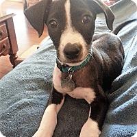 Adopt A Pet :: Luna Loo - Huntsville, AL
