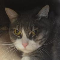 Adopt A Pet :: Orion - Oromocto, NB