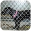 Photo 2 - Terrier (Unknown Type, Small)/Labrador Retriever Mix Dog for adoption in Brighton, Tennessee - Lola