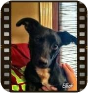 Terrier (Unknown Type, Small) Mix Dog for adoption in Groton, Massachusetts - Elliot