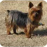 Adopt A Pet :: Libby - Jenks, OK