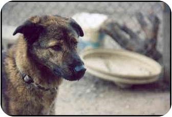 Shepherd (Unknown Type) Mix Dog for adoption in Macon, Georgia - Scout