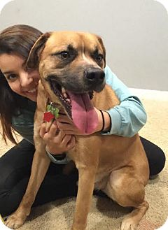 Boxer Mix Dog for adoption in Union City, Tennessee - Zeppelin