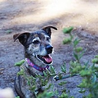 Terrier (Unknown Type, Medium) Mix Dog for adoption in Los Banos, California - Chloe
