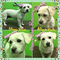 Adopt A Pet :: Mama Bear - South Gate, CA