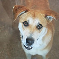 Adopt A Pet :: Ambrosia - Redwood City, CA
