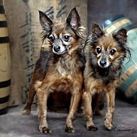 Adopt A Pet :: Trane and Vislov - Lincoln, NE