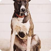 Adopt A Pet :: Addie - Portland, OR
