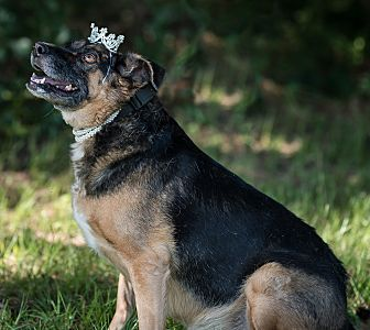 German Shepherd Dog Mix Dog for adoption in Fort Valley, Georgia - Layla