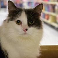 Adopt A Pet :: Rikki - Saskatoon, SK