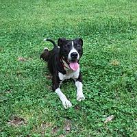Adopt A Pet :: Mr. C - KANNAPOLIS, NC