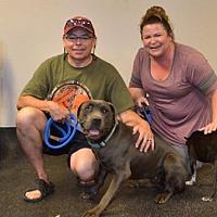 Adopt A Pet :: Harley-ADOPTED - Goodyear, AZ