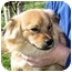 Photo 2 - Chihuahua/Dachshund Mix Dog for adoption in Mahwah, New Jersey - Atkins