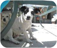 Terrier (Unknown Type, Small)/Terrier (Unknown Type, Medium) Mix Dog for adoption in San Diego, California - Blue
