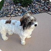 Adopt A Pet :: Ethel - Cathedral City, CA