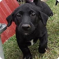 Adopt A Pet :: Princess - Jackson, TN