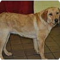 Adopt A Pet :: Belle - New Boston, NH