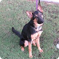 Adopt A Pet :: Duke - Scottsdale, AZ