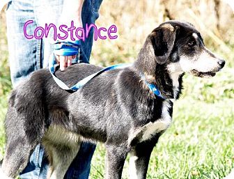 German Shepherd Dog Mix Dog for adoption in Lewisburg, West Virginia - Constance