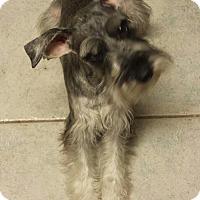 Adopt A Pet :: Cranberry - 8 month old  cutie - Phoenix, AZ