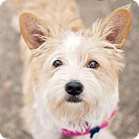 Adopt A Pet :: Phoebe - Kingwood, TX