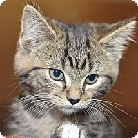 Adopt A Pet :: Remus - Medina, OH