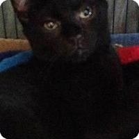 Adopt A Pet :: Shaft - Freeport, NY
