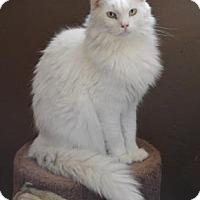 Adopt A Pet :: Rollie - Tucson, AZ