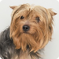 Adopt A Pet :: Woodie - Westfield, NY