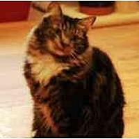 Domestic Longhair Cat for adoption in Pasadena, California - Padfoot