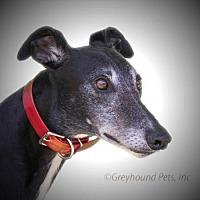 Adopt A Pet :: Stubby - Woodinville, WA
