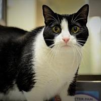 Adopt A Pet :: Lucy-URGENT - Herndon, VA