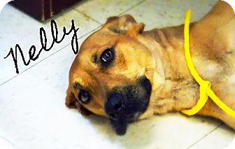 Labrador Retriever Mix Dog for adoption in Defiance, Ohio - Nelly