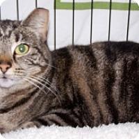 Adopt A Pet :: Brie - Sistersville, WV