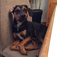 Adopt A Pet :: Roland - Staten Island, NY