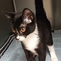 Adopt A Pet :: Chula - Americus, GA