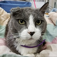 Adopt A Pet :: Topanga - Sheridan, WY