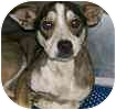 Fox Terrier (Toy) Mix Dog for adoption in Hamilton, Ontario - Buster