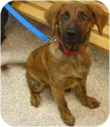 Shepherd (Unknown Type) Mix Dog for adoption in Chambersburg, Pennsylvania - Parnell