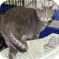 Adopt A Pet :: Shima - Milwaukee, WI