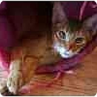 Adopt A Pet :: Cosmo - Davis, CA