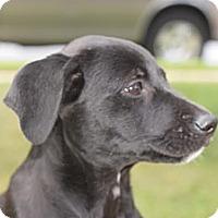 Adopt A Pet :: Tina - South Jersey, NJ