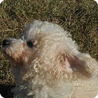 Adopt A Pet :: Valentina - Lockhart, TX