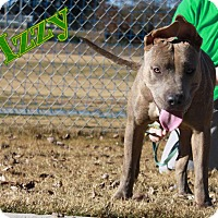 Adopt A Pet :: Izzy - Snellville, GA