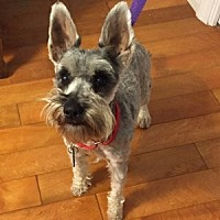 Adopt A Pet :: Carly - Redondo Beach, CA