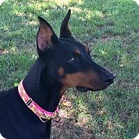 Adopt A Pet :: Mona - Arlington, VA
