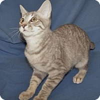 Adopt A Pet :: K-Sasha1-Sabrina - Colorado Springs, CO