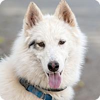 Adopt A Pet :: Meeska - Cedar Crest, NM