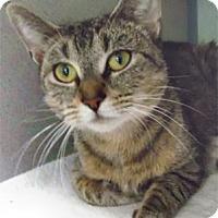 Adopt A Pet :: Maggie - Waupaca, WI