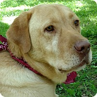 Adopt A Pet :: Charlie - Capon Bridge, WV